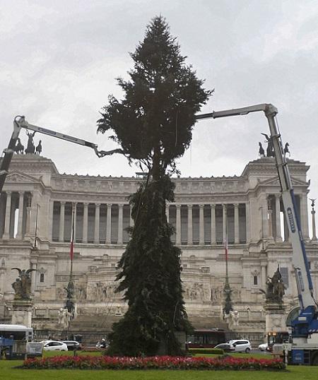"L'albero di Natale a piazza Venezia, comincia l'allestimento di ""Speraggio"" L'albero di Natale a piazza Venezia, comincia l'allestimento di ""Speraggio"""